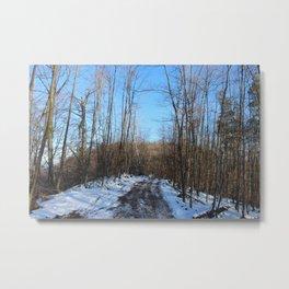 Leafless trees in winter Metal Print