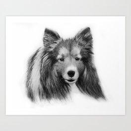 Shetland Sheepdog Art Print