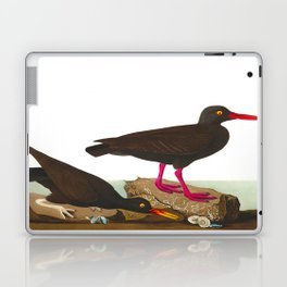 White-legged Oyster-catcher, or Slender-billed Oyster-catcher Bird Laptop & iPad Skin