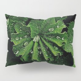 Dew On Rose Scented Geranium Leaves Pillow Sham