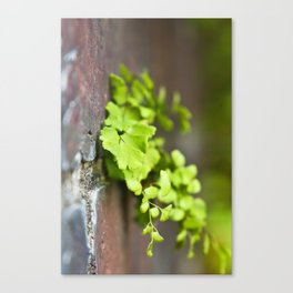 Green Plants Auckland 2019 Canvas Print