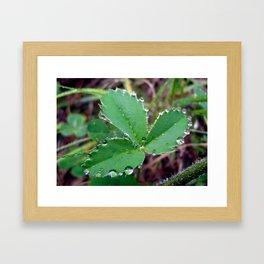 3 Leaf Clover Framed Art Print