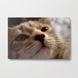 Sleepy Kitten Metal Print
