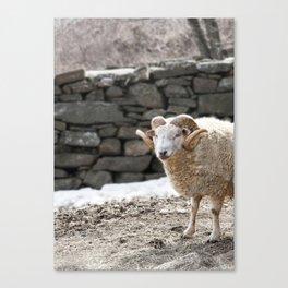 Aries, the Ram, in Winter Barnyard Canvas Print
