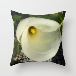 Overhead Shot of A Cream Calla Lily In Soft Focus Throw Pillow