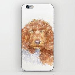 Cockapoo portrait iPhone Skin