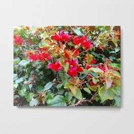 Red Flowers Blooming After the Rain Metal Print