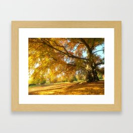 Copper Beech in Autumn Glow Framed Art Print