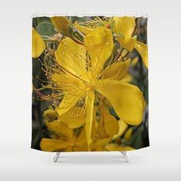 Hypericum flower closeup Shower Curtain