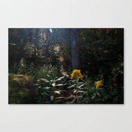 Cynefin. Canvas Print