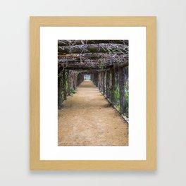 Coker Arboretum Tunnel Framed Art Print