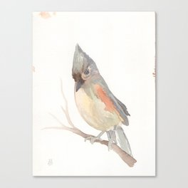 Tufted titmouse (Baeolophus bicolor) Canvas Print
