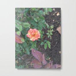 Pink Flower #1 Metal Print