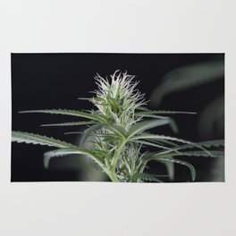 Cannabis Marijuana Flower Early Stage Rug