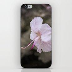 Delicate Reach iPhone & iPod Skin