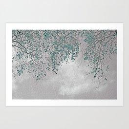 Silver Birch Art Print