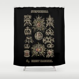 """""""Stephoidea"""" from """"Art Forms of Nature"""" by Ernst Haeckel Shower Curtain"""