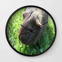 guinea pig Wall Clocks featuring Guinea Pig by Rose&BumbleBee