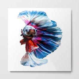 Magnificent Betta Splendens Freshwater Fish Metal Print