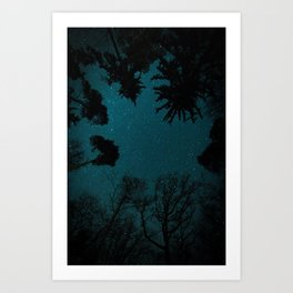 Tall Forest Trees Under a Starry Sky Art Print