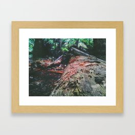A Log Into The Forest Framed Art Print