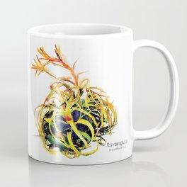 Tillandsia Xerographica Air Plant Watercolor Coffee Mug