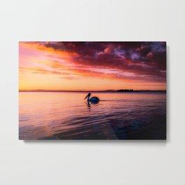 Swimming Pelican Metal Print