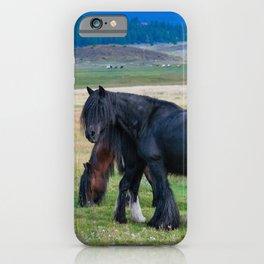 Gypsy Vanner Horses 0258 - Colorado iPhone Case
