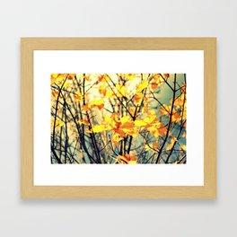 Autumn Light Framed Art Print