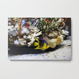 Tropical Fish Cutie Metal Print