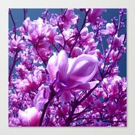 purple magnolia IV Canvas Print