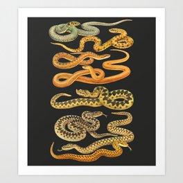 Snakes at Night Art Print