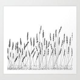 Black Lavender Flowers Art Print