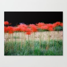 spider lillies Canvas Print