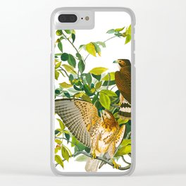 Broad Winged Hawk Clear iPhone Case