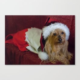 Yorkshire (yorkie) / Silky Terrier Christmas Canvas Print