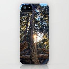 Good Morning Sunshine! Marion Mountain Trail - San Jacinto Peak - California iPhone Case