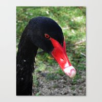 black swan Canvas Prints featuring Black Swan by Moonshine Paradise