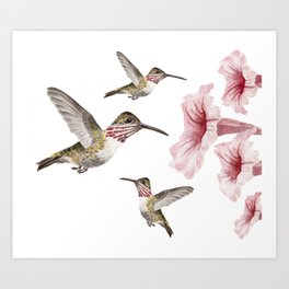 hummingbirds and pink flowers 2 Art Print