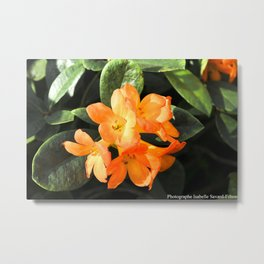 tropicals flowers Metal Print