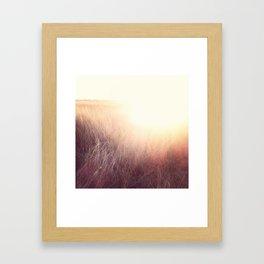 Amber Fields Framed Art Print