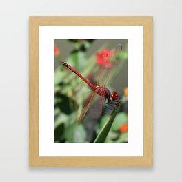 Red Skimmer or Firecracker Dragonfly Framed Art Print