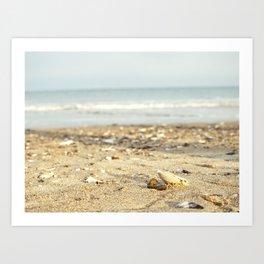 Shells in the Sand Art Print