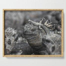 Galapagos marine iguana Serving Tray