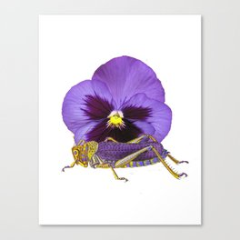 Purple Grasshopper and Viola Canvas Print