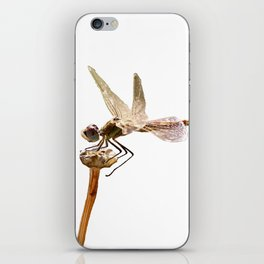 Dragonfly Resting On Seed Head Isolated iPhone Skin
