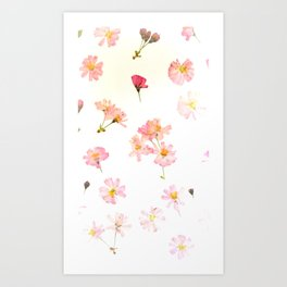 Pressed Blossoms Art Print