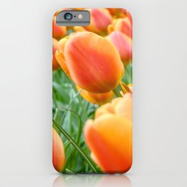 Rows of tulips in the Netherlands iPhone Case