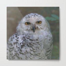 Snowy Owl, Schnee-Eule Metal Print