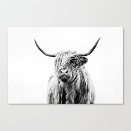 portrait of a highland cow (horizontal) Canvas Print